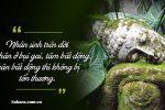 99+ Những Câu Nói Hay Của Phật về Đời, Nhân Quả & Tình Yêu